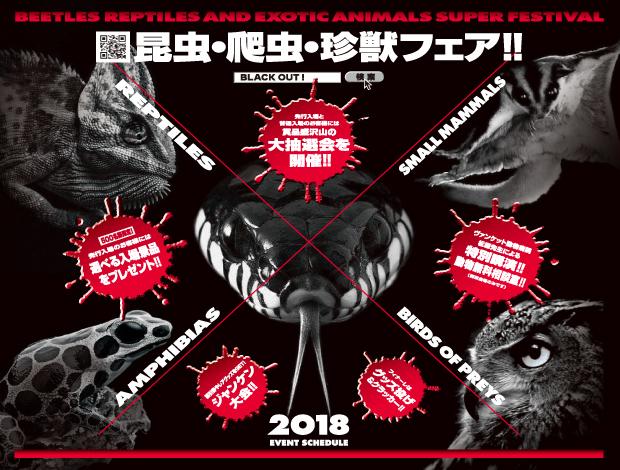 昆虫・爬虫・珍獣フェア‼《BLACK OUT》